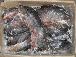 Вступили в силу новые правила производства и продажи рыбной продукции